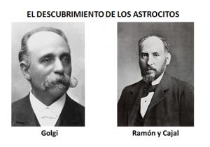 Oligodendrocitos y astrocitos fibrosos